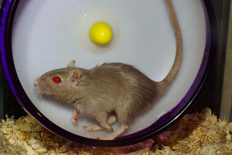 quitter-rat race